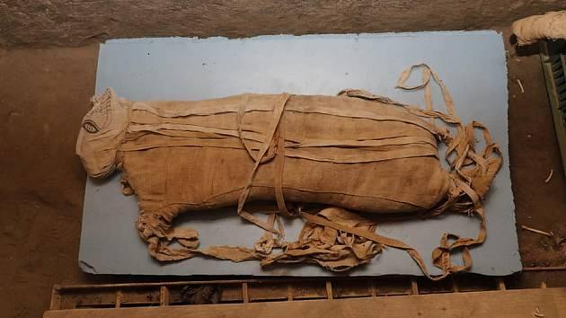 Cukrová mumie se připojí v keni