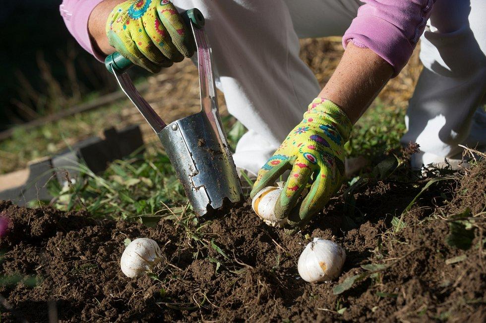 S příchodem prvních podzimních dnů je dobré uložit do půdy cibule květin, které začínají kvést na jaře nejdřív.