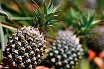 Ananas, ilustrační foto.