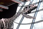 V Eiffelově věži vydražili kostru neznámého druhu dinosaura