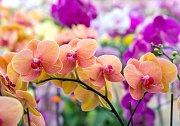 Orchideje nemají rády přímé slunce