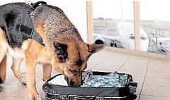 ŽIVÝ TERČ. Z policejního vlčáka je pes na útěku.