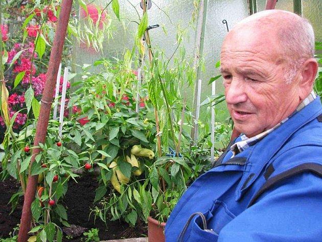 Skleníky pěstitele Milana Jánošíka v bruntálské zahrádkářské kolonii Na Vyhlídce jsou plné nejen rostlinek pálivých feferonů, ale i jiné zeleniny.