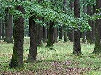 Pohled do lesa