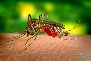 Komáři - Ilustrační foto
