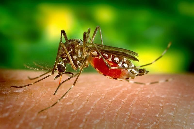 """Podle amerického Ústavu pro kontrolu a prevenci nemocí jsou komáři """"nejnebezpečnějším organismem na světě""""."""