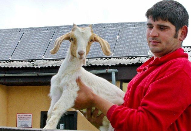 Kozlata jsou lákadlem pro děti, které se vypraví do Pěnčína na školní výlet.