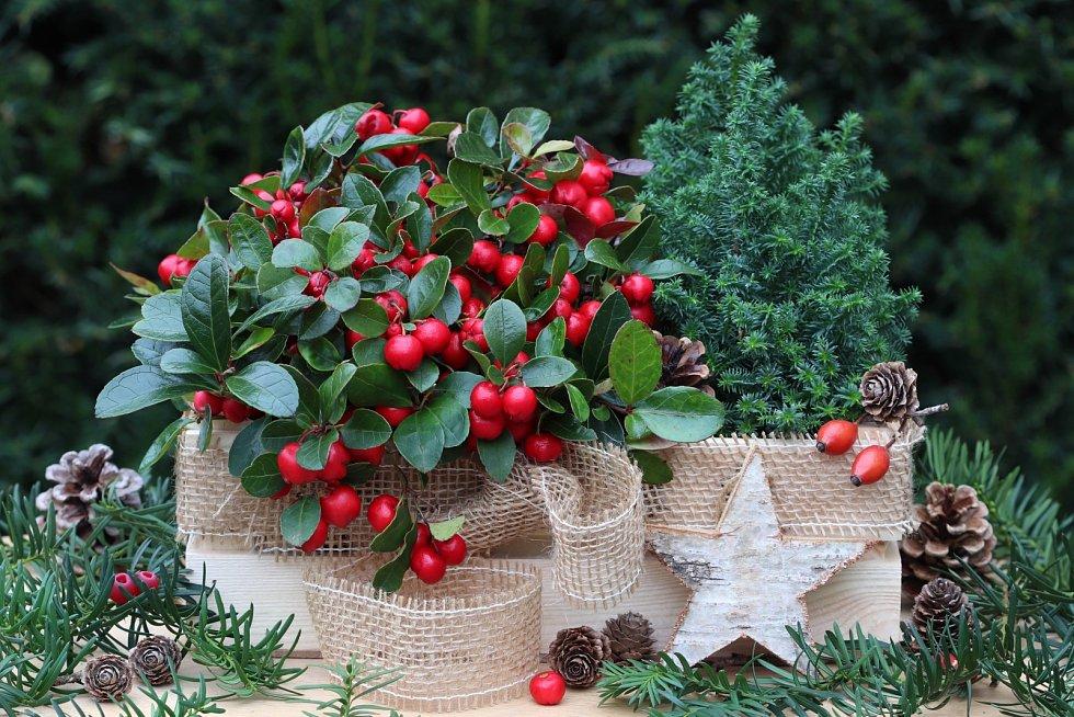 Zimní zahradní dekorace s libavkou a smrkem v dřevěné krabici.
