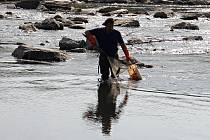 Do řeky Bečvy unikl kyanid. Uhynulo mnoho tun ryb.
