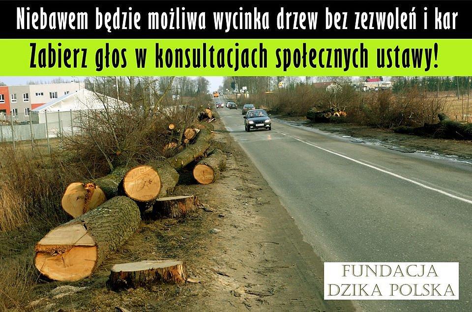 Proti kácení posledního zbytku původního evropského pralesa protestovaly stovky aktivistů. S kácením podél silnic není problém.