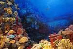 Vědci se pokusí navrátit korály na mořské dno pomocí 3D tisku.