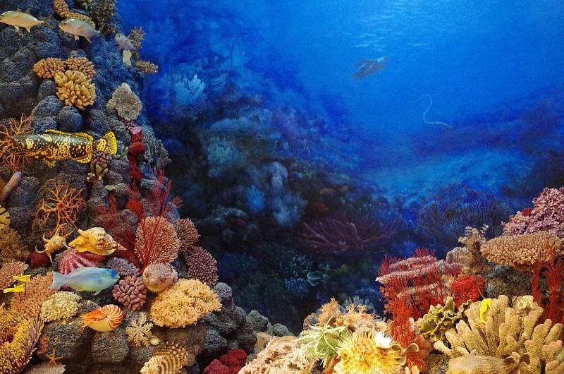 Nyní korály složitě navracejí vědci pomocí 3D tisku