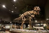 Kostra tyranosaura.