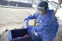 Zdravotnice ukládá do boxu vzorky k otestování na nemoc covid-19 14. srpna 2020 v areálu Fakultní nemocnice Brno.