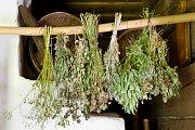 Sušené bylinky mohou vonět celý rok.