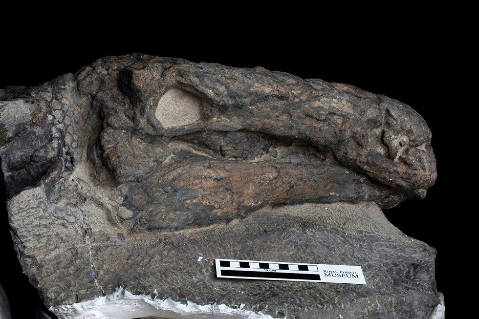 Nodosaurus Borealopelta markmitchelli