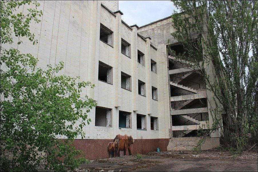 V uzavřené zóně na místě černobylské havárie se dnes daří fauně, budovy postupně pohltila příroda