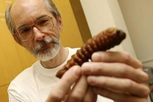Český entomolog Petr Švácha, kterého v září indický soud zprostil obžaloby z nedovoleného sběru hmyzu, je zpět ve své pravcovně na Jihočeské univerzitě v Českých Budějovicích.