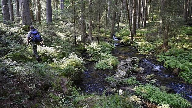 Oblast Boubínského pralesa.