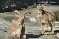 NÁKLONNOST. Sympatie ke stejnému pohlaví projevují zvířata napříč druhovou skladbou.