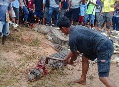 Masakr krokodýlů v Indonésii