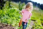 Mrkev je vhodnou zeleninou pro malé pěstitele