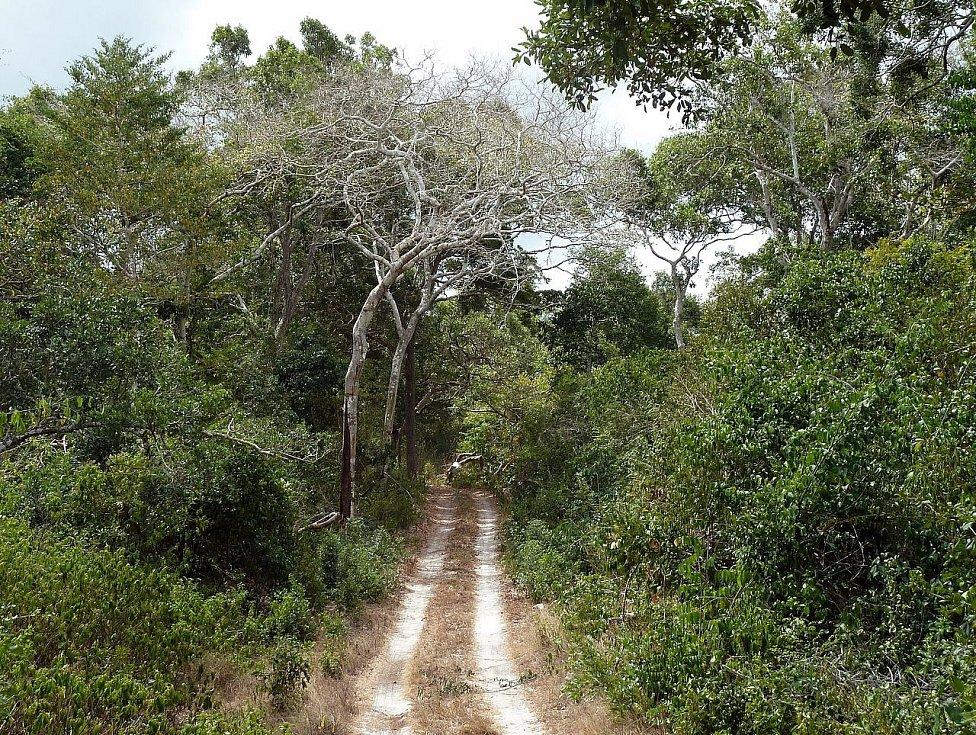Okoí jeskyně tvoří národní park Arabuko Sokoke