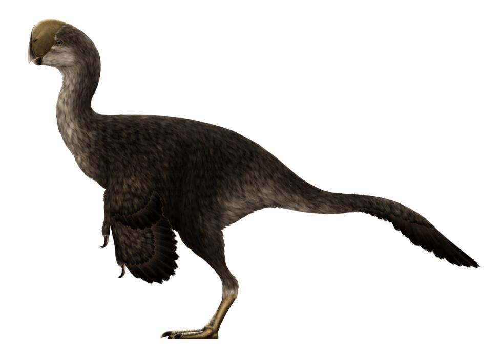 """Pravděpodobný vzhled """"pštrosího teropoda"""" neboli oviraptora"""