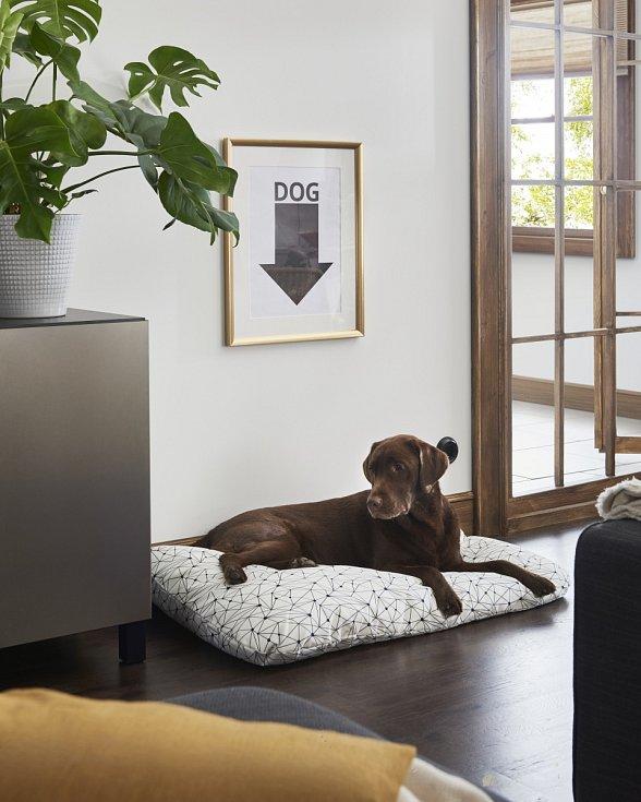 Umístit pelíšek blízko venkovních dveří, kudy často chodí lidská smečka ven, není rozumné. Pes potřebuje k odpočinku klidné místo.