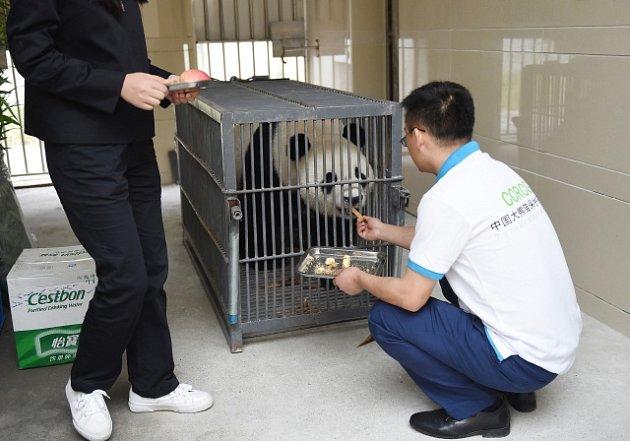 Indonésie vítá čínské pandy