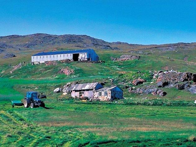 Grónsko se výrazně mění. Stále delší léto umožňuje rozvoj zemědělství a mluví se již o vysazování lesů pro komerční účely.