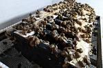 Manželé Jiřina a Jiří Studničkovi chovají hlemýždě jedlého kaviárového z Afriky ve venkovní ohradě ve Strážově i ve vnitřních prostorách v Bystřici nad Úhlavou. Připravují z nich různé výrobky. Nabízejí je i na trzích. Foto: Deník/Milan Kilián a archiv St