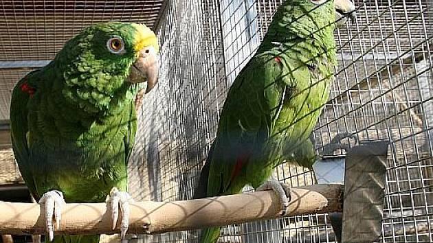 Bošovická zoo láká na stovky papoušků