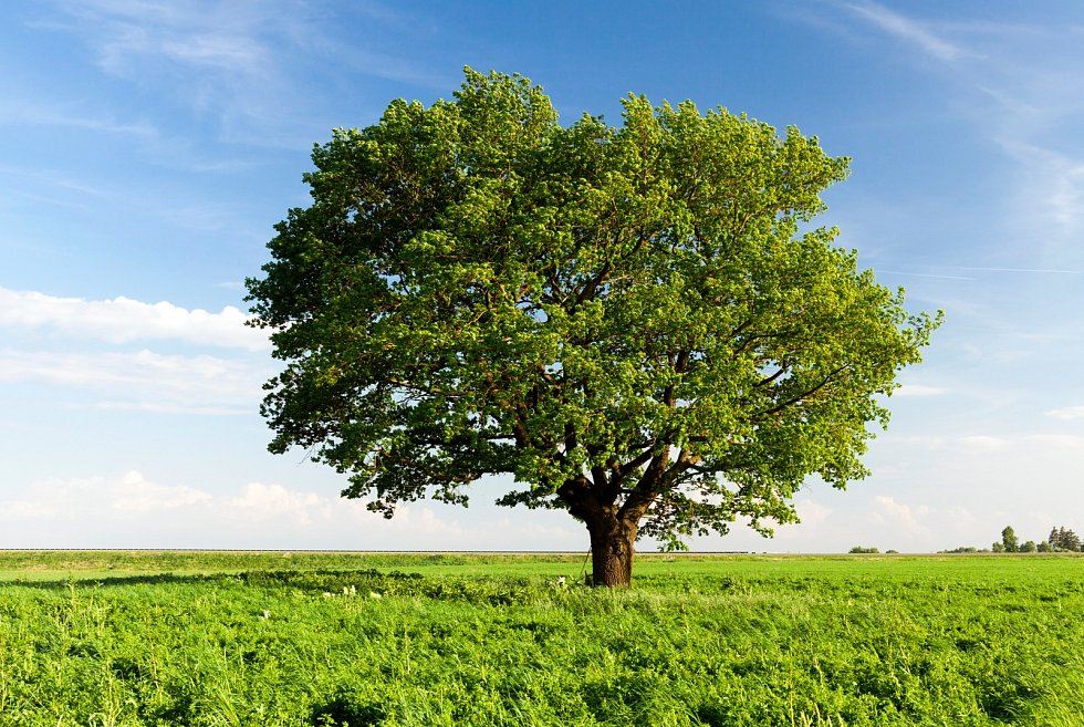 Místo pro výsadbu vyberte podle toho, o jaký druh, odrůdu či podnož jde, a ohled berte i na pěstitelský tvar nebo nároky.