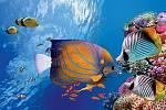 Množství arůznorodost podmořského života činí zHavelocku jednu znejlepších potápěčských lokalit světa.