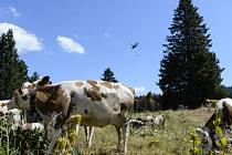Švýcarská armáda ukončila misi, během které měsíc letecky dopravovala vodu kravám pasoucím se na švýcarské straně pohoří Jura a ve Vaudských Alpách.