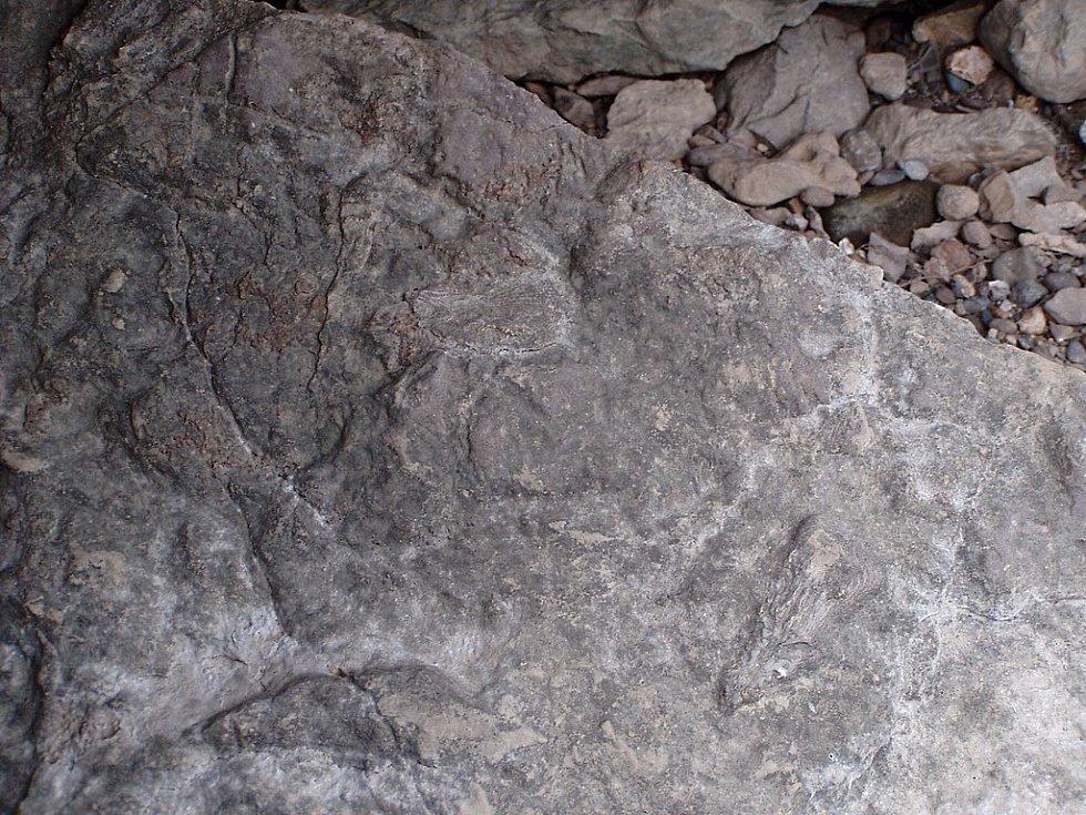 Zkamenělina lilijice pocházející z Ohio State Park