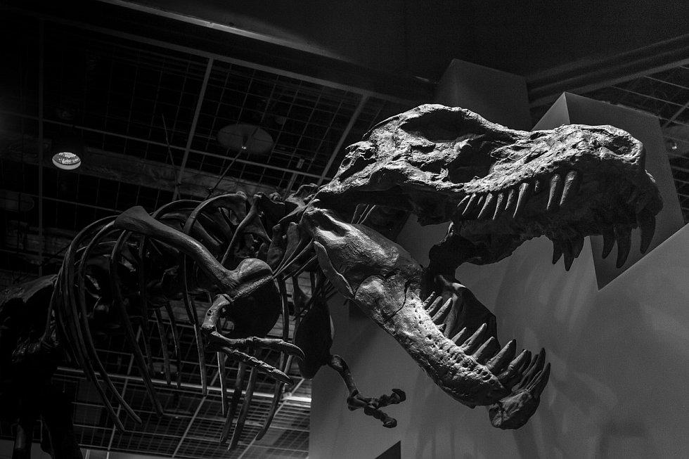 Tyrranosaurus se vyskytoval před asi 68 až 66 miliony let (na konci křídové periody druhohorní éry) na území celého západu dnešních Spojených států amerických a části Kanady a Mexika.