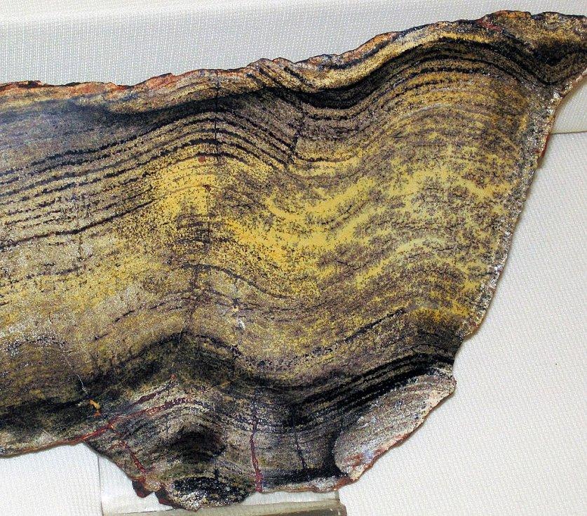 Stromatolit z období prekambria, nalezený v západní Austrálii