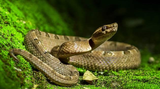 Had - ilustrační snímek