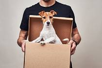 Pes jako dárek - Ilustrační foto