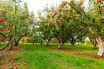 Ovocné stromy potřebují péči