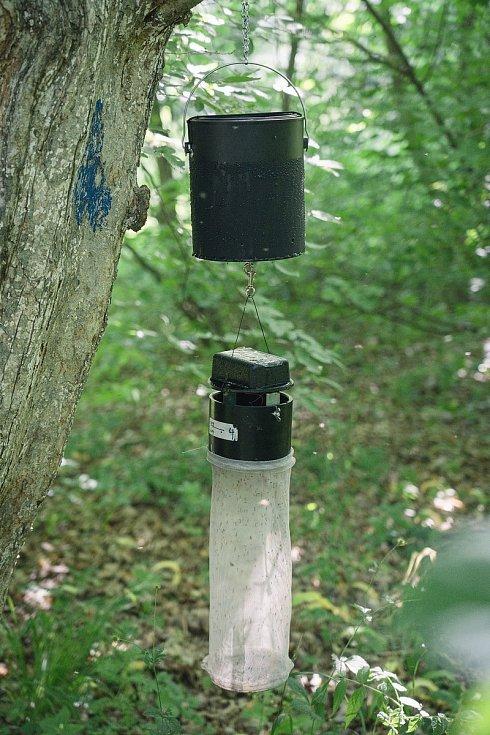 Ke sledování populace komárů slouží hygienikům speciální pasti. Okřídlený hmyz chytají na Břeclavsku v lužních lesích či na březích rybníka v rákosí.