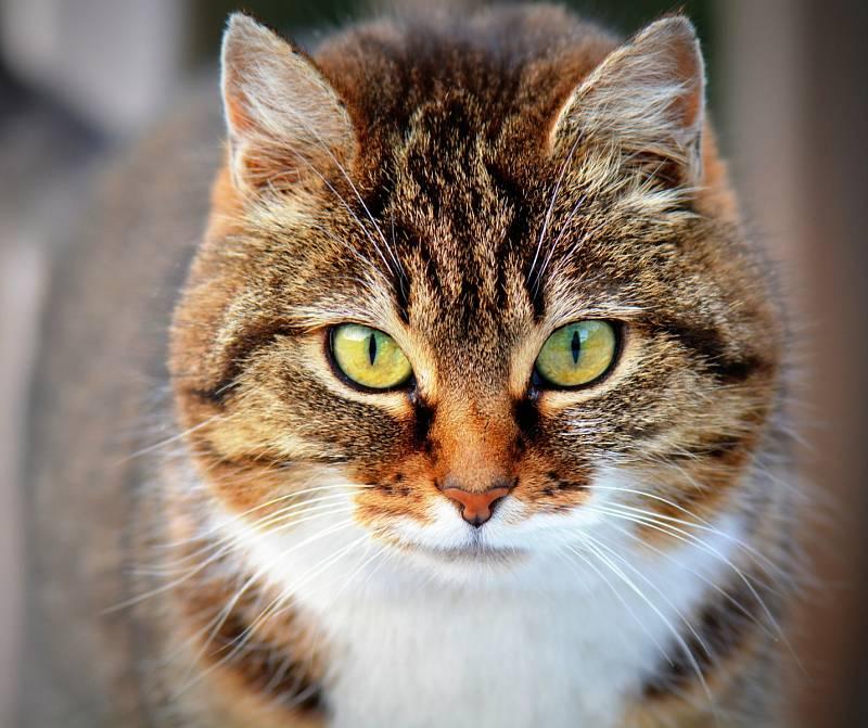 Kočky žijí slidmi po tisíce let. Pocházejí totiž ze severoafrických a asijských divokých koček. Kočky a lidé se tak pravděpodobně potkali na Středním Východě přibližně 6500 let zpátky, kdy vznikaly první zemědělské komunity.