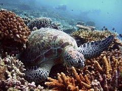 Zhruba 100 milionům lidí hrozí ztráta živobytí, pokud nebudou podniknuty rázné kroky k ochraně korálových útesů v jihovýchodní Asii. Na snímku korálové útesy v Indonésii.