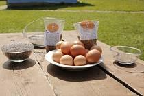 Stejná látka jako ve vejcích v Holandsku se našla i v chia semínkách
