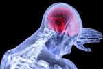 Lidský mozek svoji definitivní podobu a dospělost získává až kolem pětadvacátého roku člověka.