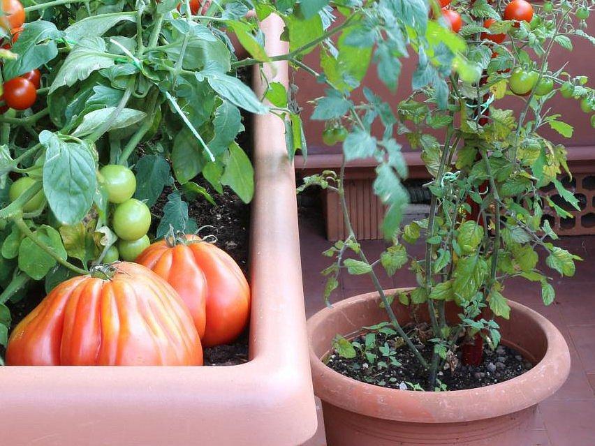Zelenina, ilustrační foto