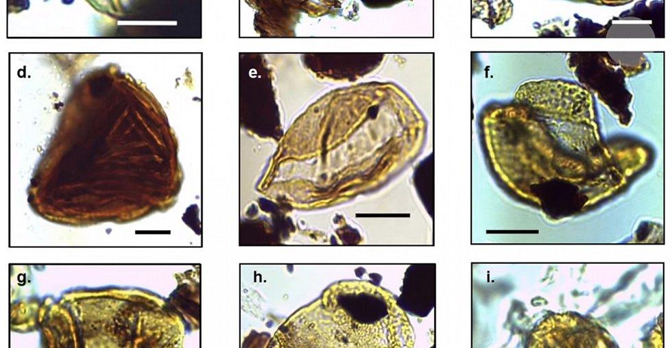 V těchto vzorcích objevili stopy dávných rostlin