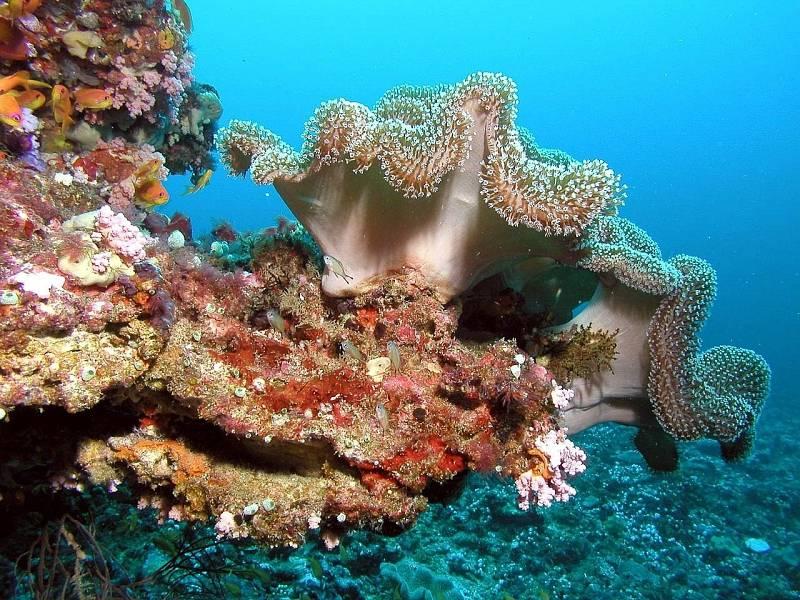 Právě bezobratlí se v korálech shlukují do obřích podvodních kolonií.